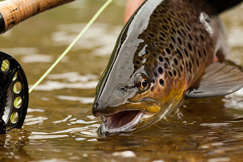 Fly fishing trip with Far and Away Adventures